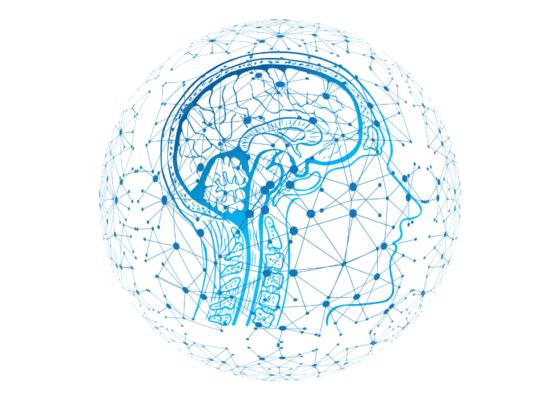 Contrôle de connaissances neuroscientifiques